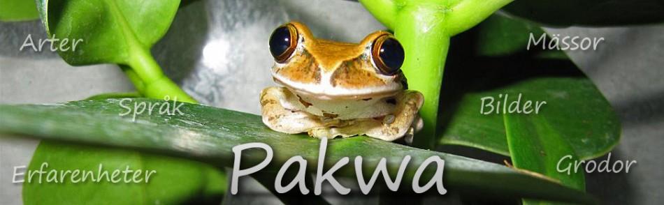 Pakwa - en galen groda i rullstol